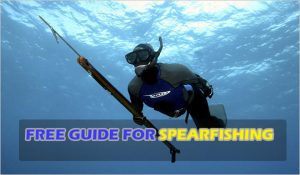free-guide-for-spearfishing