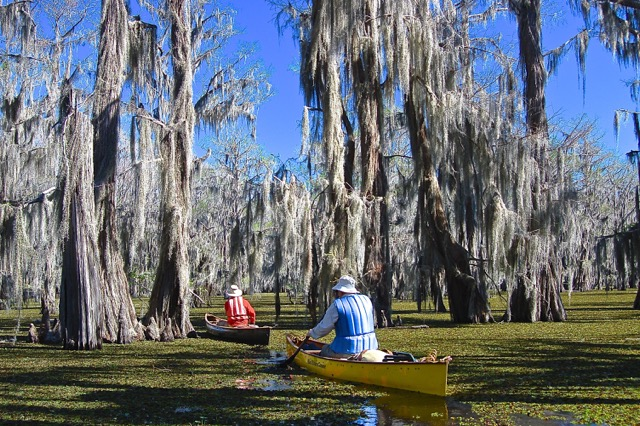 Caddo Lake kayaking
