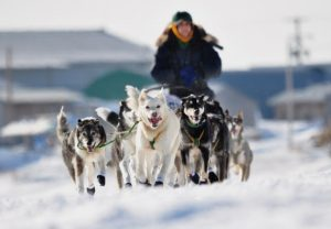 dog race in alaska